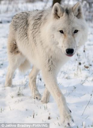 Lottery akkurat gratis Wolf Mitfahrgelegenheit